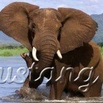 Національний парк Чобе - слонова столиця світу