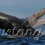 Ісландія пропонує постежити за китами
