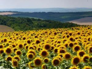 Заповідники Молдови - краса первозданної природи [draft]